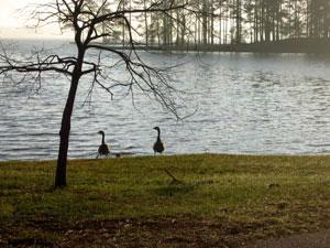 Lake Martin State Park