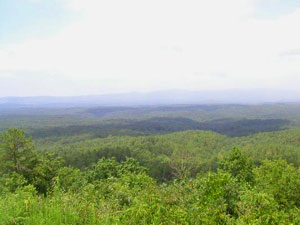 Talladega National Forest