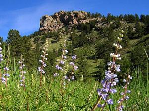 Arthurs Rock - Lorypark State Park