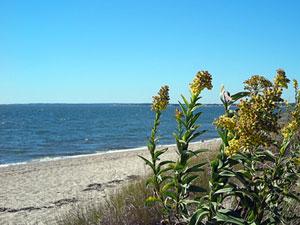 Hammonassett Beach State Park