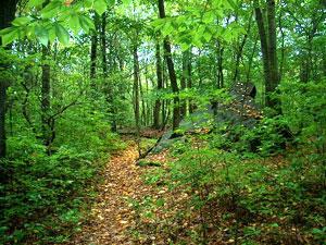 Roosevelt Forest State Park