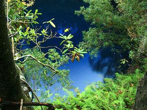 Apalachicola National Forest - Big Dismal Sink