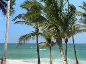 Florida Keys - coconut palms