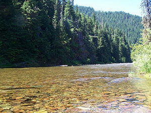 North Fork Coeur d' Alene River