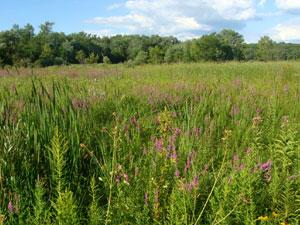Ferson Creek Nature Preserve