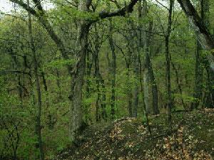Forest Park Nature Preserve