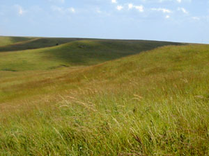 Iowa Tall Grass Prairie