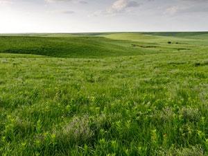 Tall Grass National Preserve
