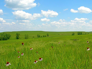 Tall Grass Prairie National Preserve