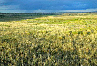 Kansas prairie landscape