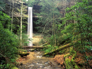 Daniel Boone National Forest - Yahoo Falls