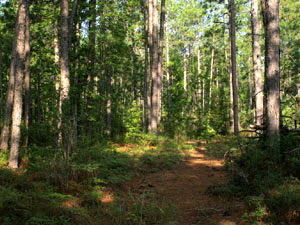 Kisatchie National Forest