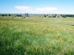 Ogala National Grassland