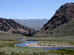 Humboldt-Toiyabe National Forest