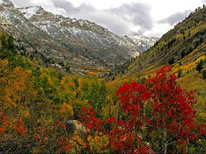 Humboldt-Toiyabe National Forest - Lamoille Canyon