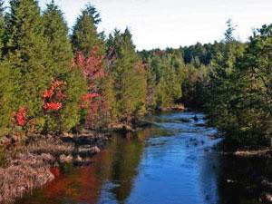 Pine Barrens State Park