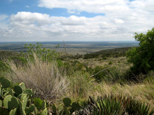 near Carlsbad Caverns