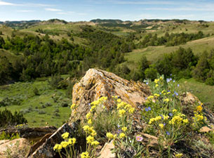 Killdeer Mountains - wildflowers