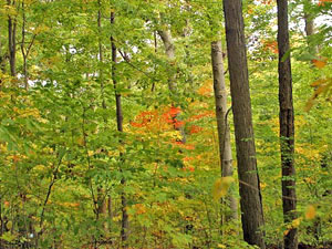 Dysart Woods State Forest