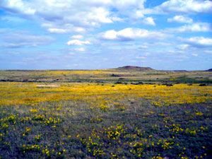 Black Kettle National Grassland
