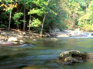 Cherokee National Forest - Bald River