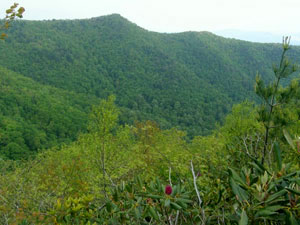 Chimney Top - Jefferson National Forest