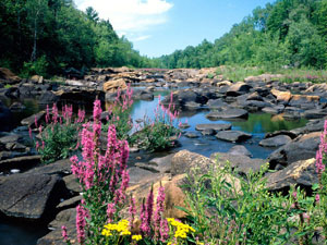 Chequamegon National Forest - Ice Age National Scenic Trail