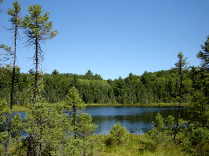 Northern Highland State Forest